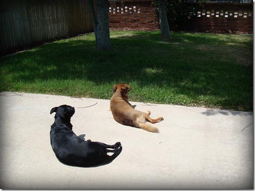 Pups 016