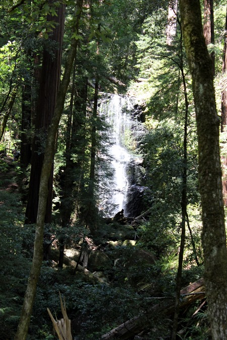 Hiking Big Basin (175)