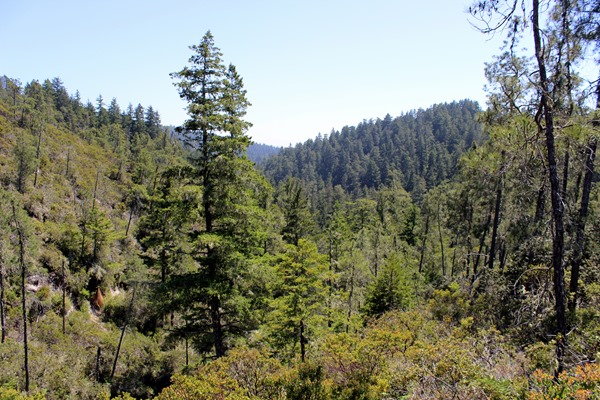 Hiking Big Basin (241)
