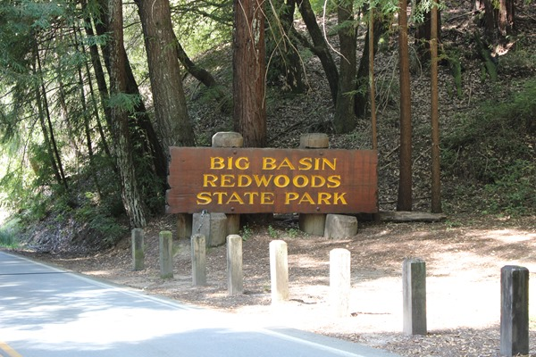 Hiking Big Basin (2)