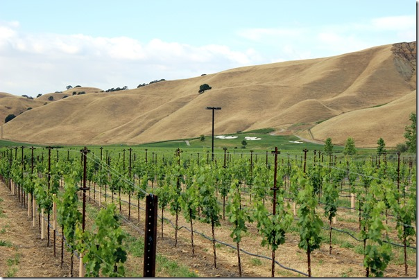 Wente Vineyards (10)