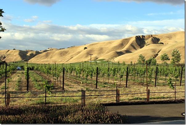Wente Vineyards (33)