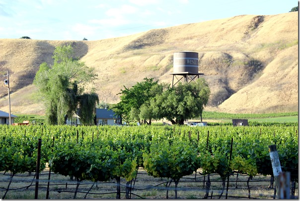 Wente Vineyards (44)