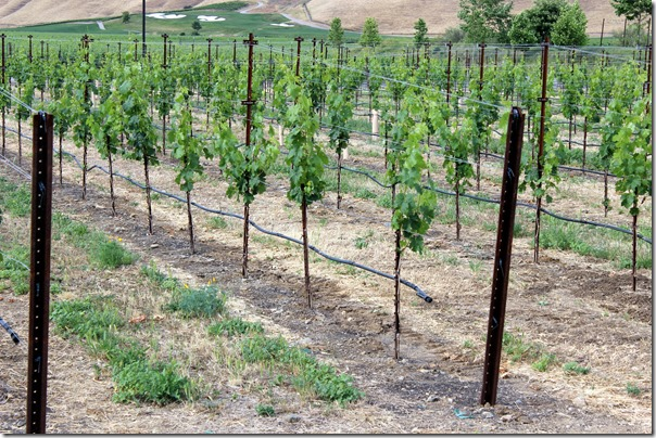 Wente Vineyards (9)