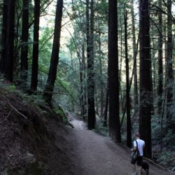 Hiking-Redwood-Regional-Park-108.jpg