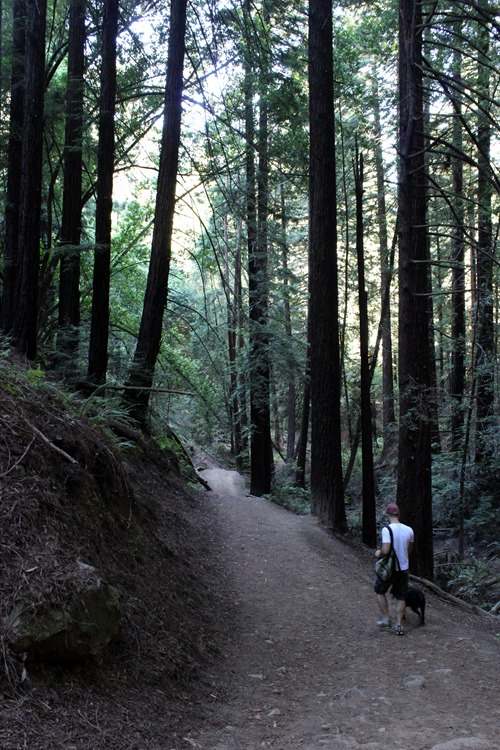 Hiking Redwood Regional Park (108)