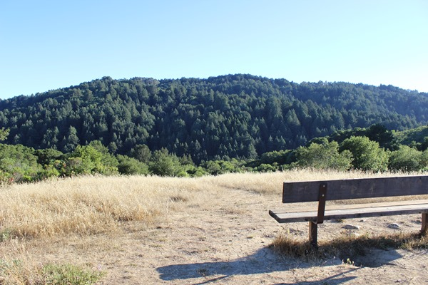 Hiking Redwood Regional Park (143)