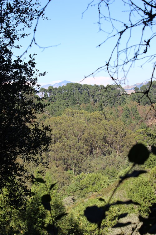 Hiking Redwood Regional Park (27)