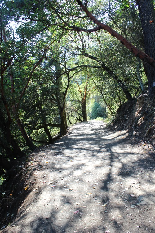Hiking Redwood Regional Park (52)