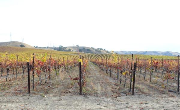 vineyard robertson park