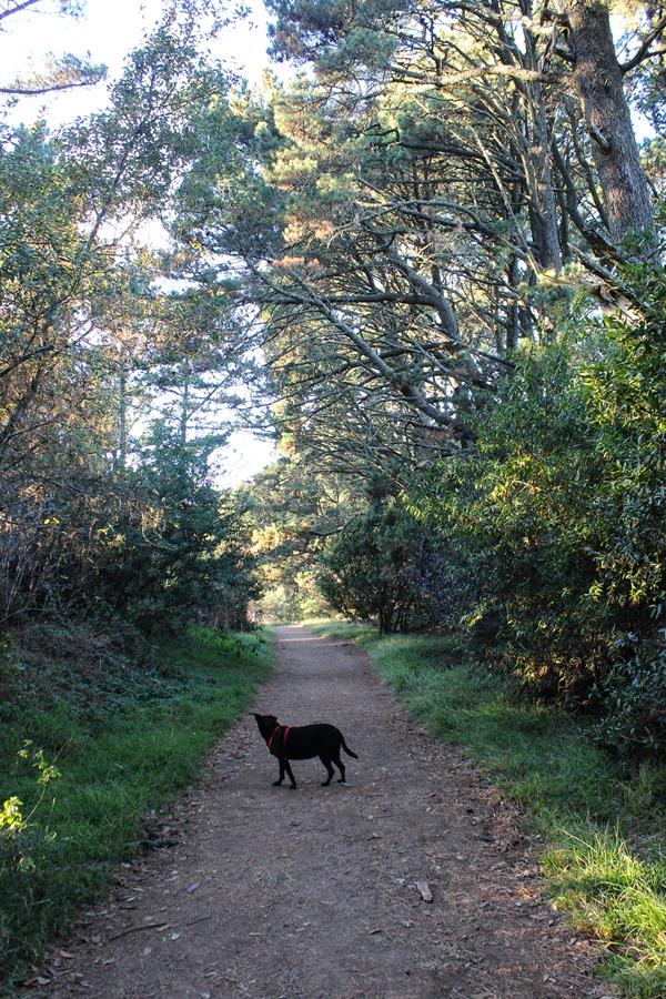 Quarry Trail Oakland