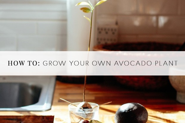 growyourownavocado-660x440_thumb.jpg