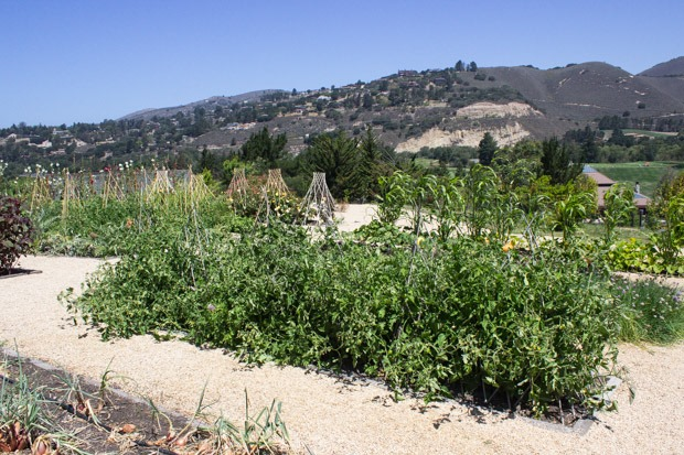 Carmel-Valley-Ranch-Garden-1_thumb.jpg