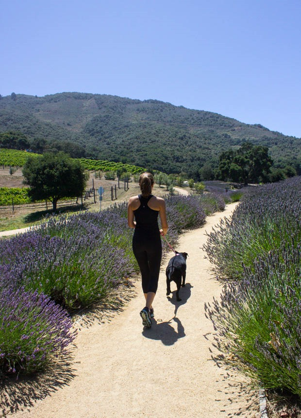 Carmel-Valley-Ranch-Lavender-__thumb.jpg