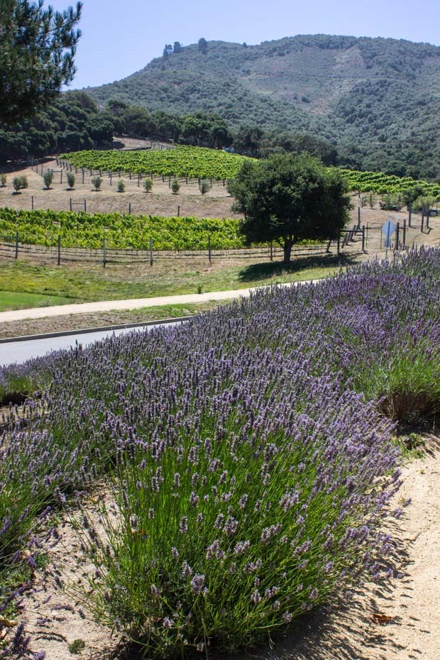 Carmel-Valley-Ranch-Lavender__thumb.jpg