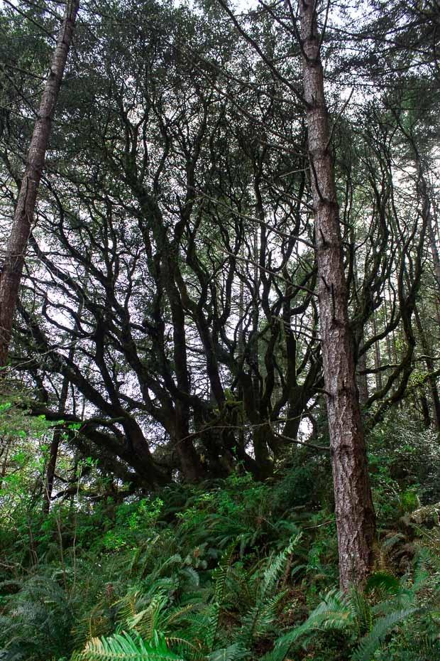 Alamere-Falls-Hike-11_thumb.jpg