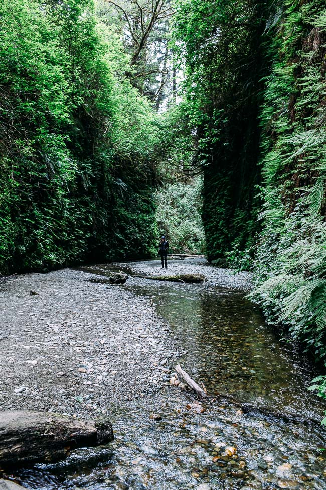 Road Trip from California to Oregon: where to eat, sleep and play | Fern Canyon #travel