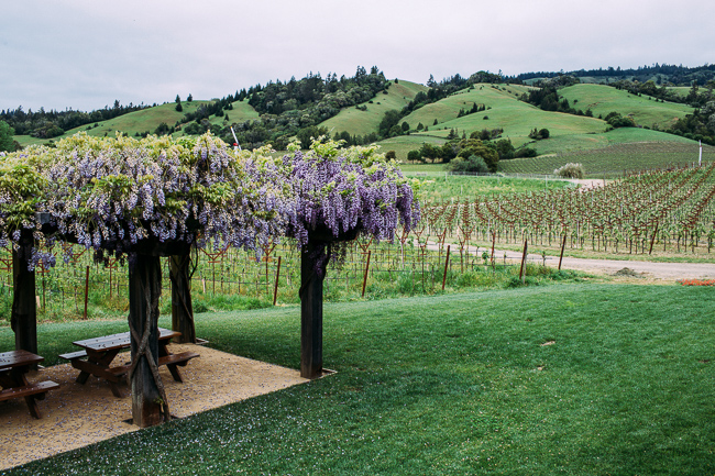 Navarro Vineyards | Anderson Valley Travel Guide | Mendocino County