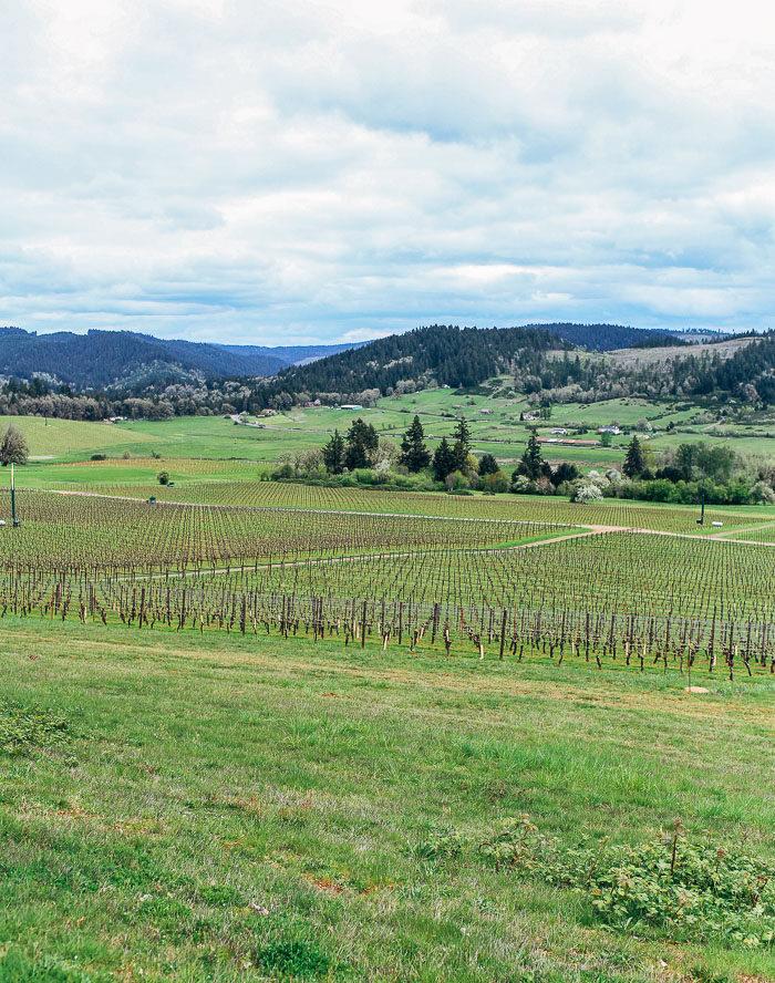 Wine Tasting in Willamette Valley | travel guide