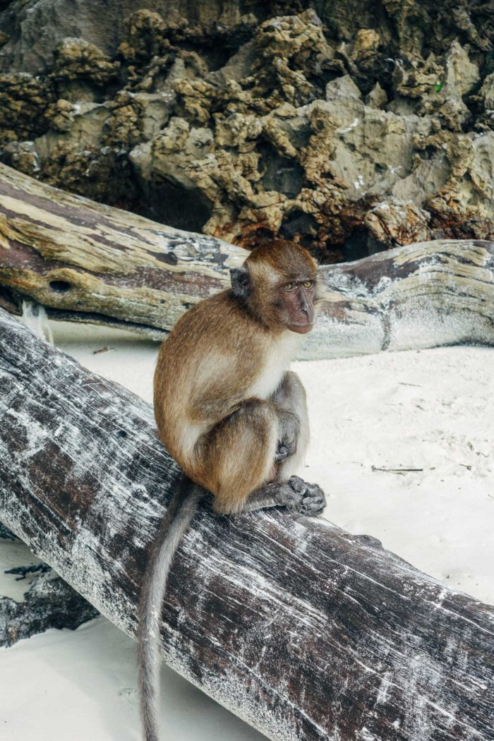 Monkey Beach in Thailand (Phuket Travel Guide)