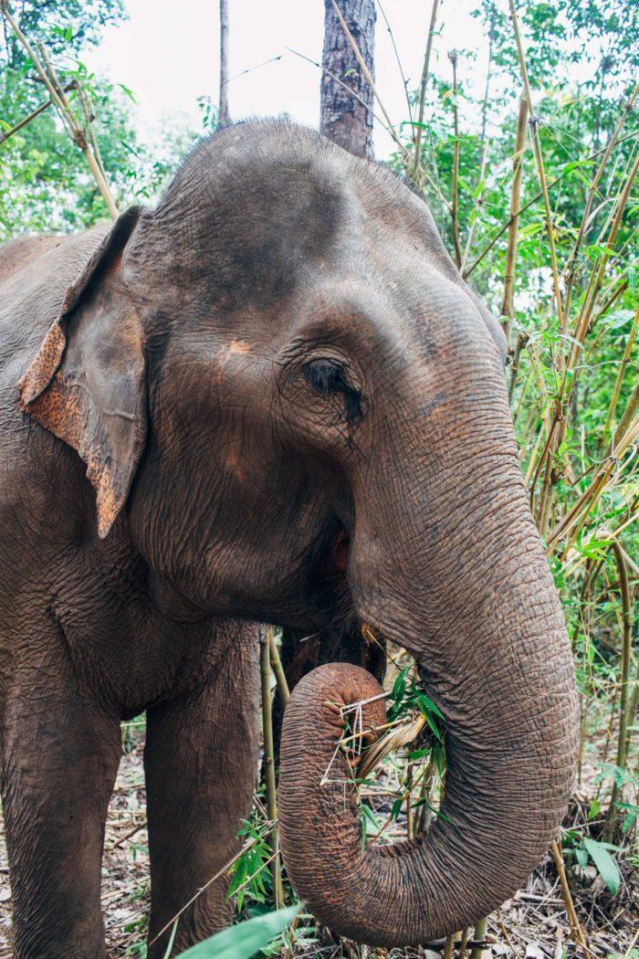 Elephant Nature Park 006