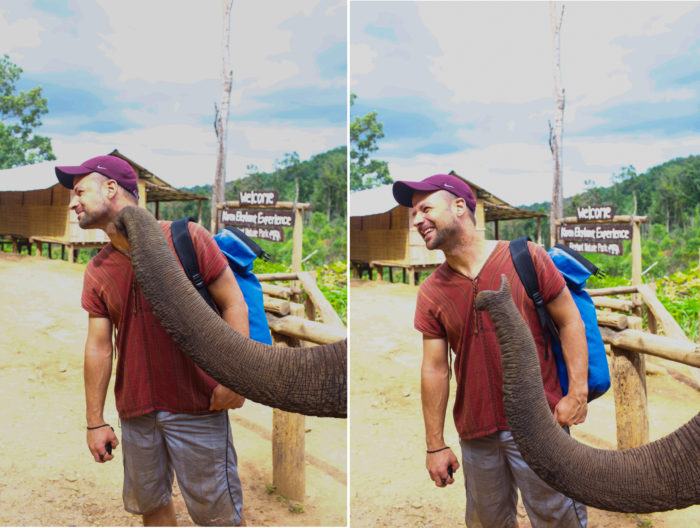Pet Kisses Elephant Nature Park