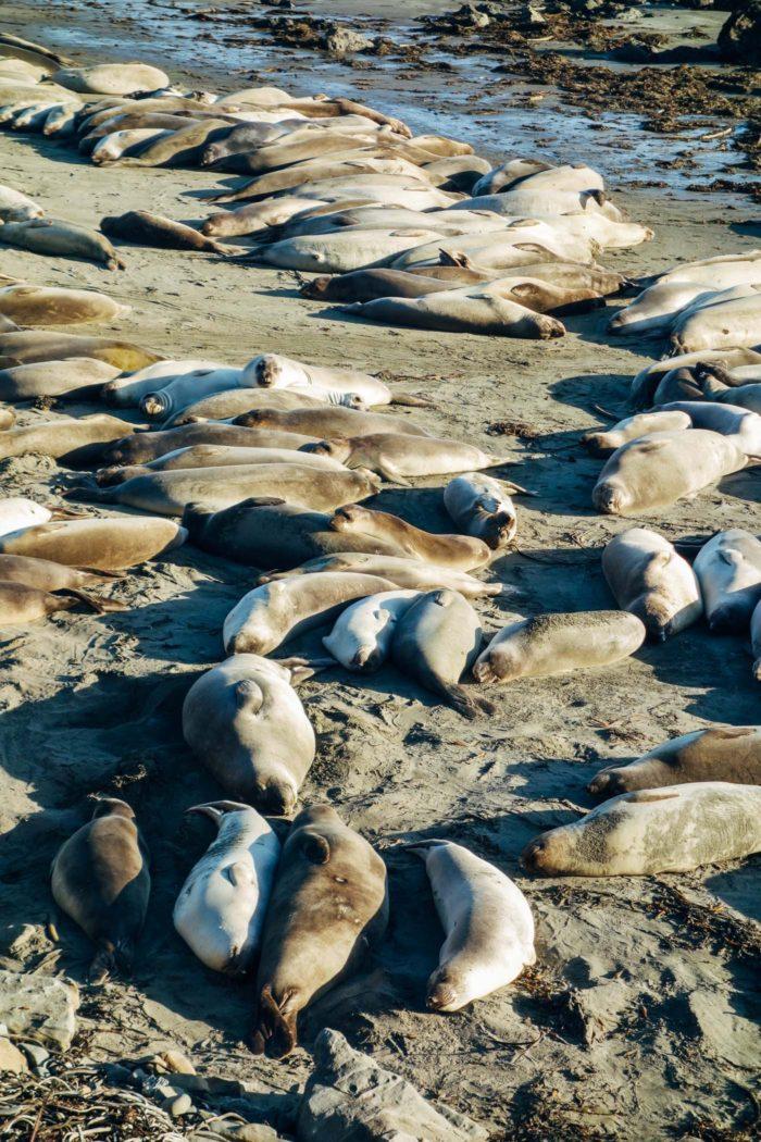 seals-_
